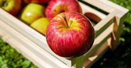 Apple Day at Cogges 15 October