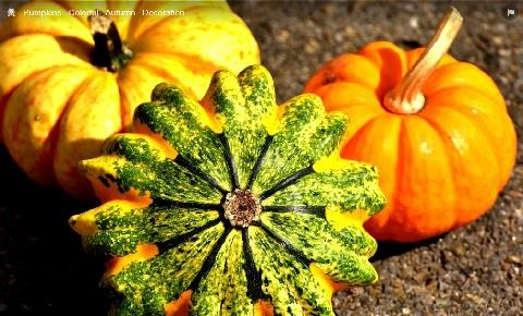 Pumpkin Day at Cogges 29 October