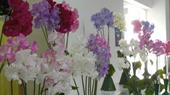 Witney Horticultural Society Sweet Pea and Rose Show
